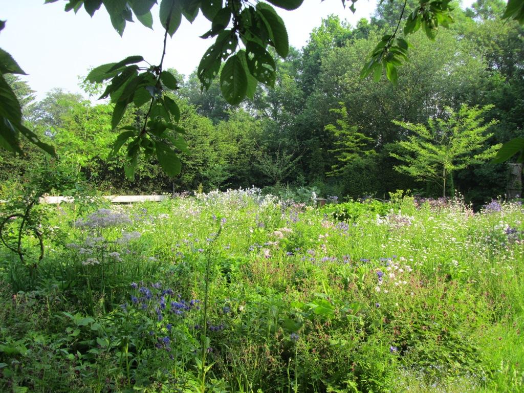 bloemen-mei2012-005-kopie