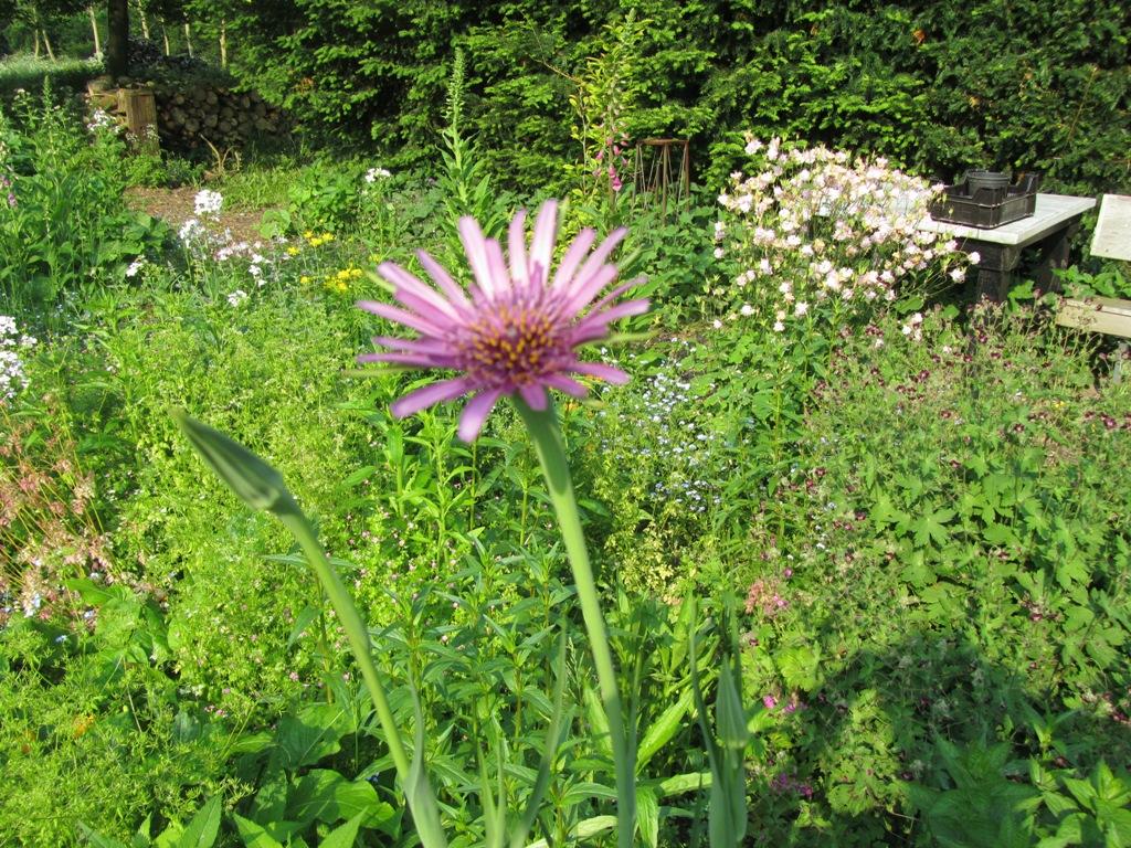 bloemen-mei2012-007-kopie