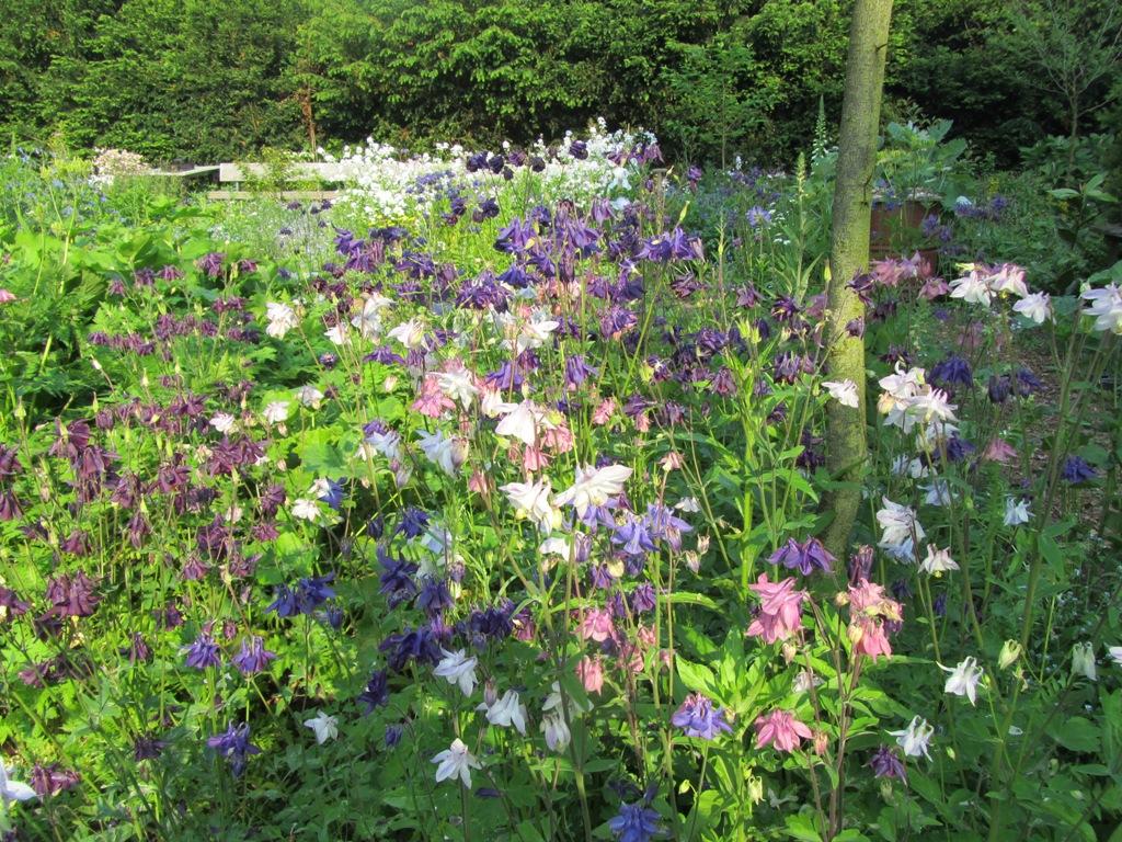 bloemen-mei2012-008-kopie