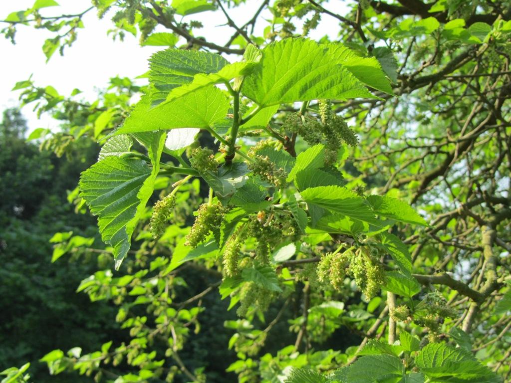 bloemen-mei2012-010-kopie